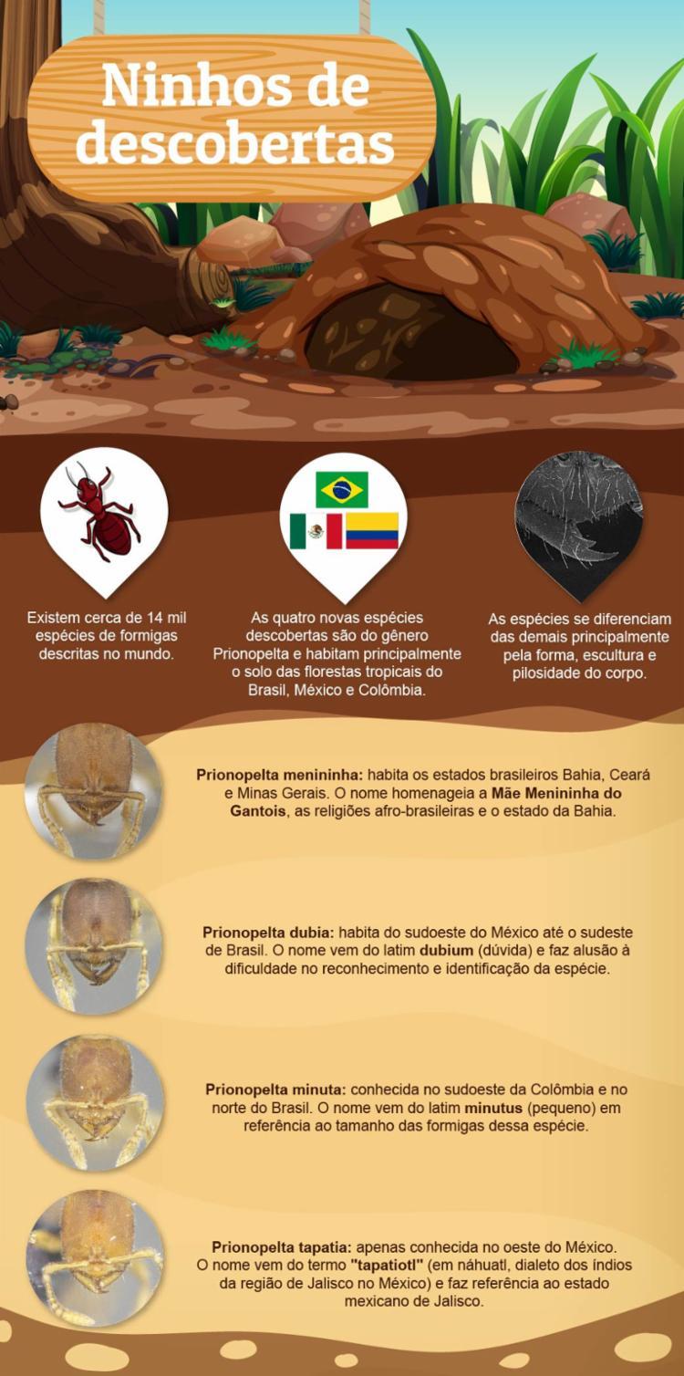 Espécies foram identificadas através de características específicas | Foto: Juliana Barbosa | Divulgação | Aspec UFPR