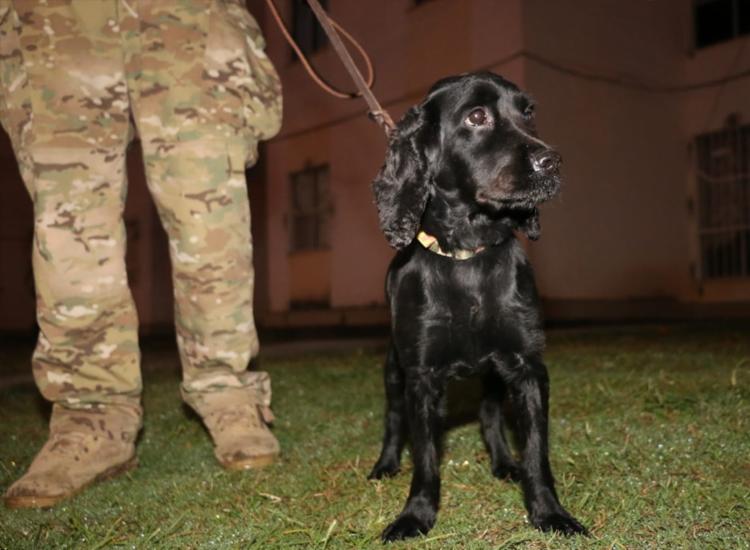 Cães farejadores auxiliarem nas buscas em imóveis dos suspeitos | Foto: Divulgação | SSP