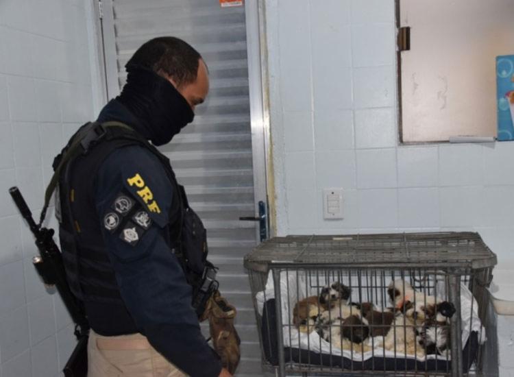 Filhores foram encontrados aglomerados em 13 caixas de plástico e uma de papelão - Foto: Divulgação | PRF