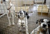 Adoção e abandono de animais domésticos aumentam durante a pandemia | Foto: Fábio Pozzebom | Agência Brasil
