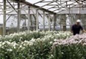 Aumenta venda de flores a homoafetivos   Foto: Fernando Vivas   Ag. A TARDE