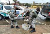Sucuri e mais um jacaré são resgatados na praia de Jaguaribe | Foto: Divulgação