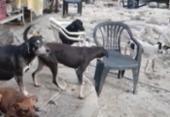 Mulher é presa por manter mais de 100 cães e gatos em situação de maus-tratos | Foto: Divulgação | CRMV-BA