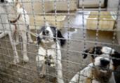 Pandemia: Adoção e abandono de animais aumentam | Fábio Pozzebom | Agência Brasil