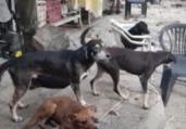 Mulher é presa em flagrante por maus-tratos a animais | Divulgação | CRMV-BA