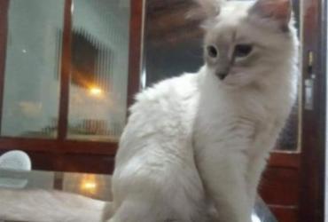 Brasil registra 1º caso confirmado de Covid em animal | Divulgação
