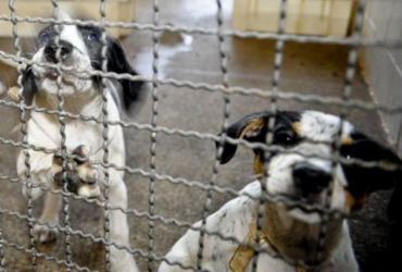 Adoção e abandono de animais domésticos aumentam durante a pandemia | Fábio Pozzebom | Agência Brasil
