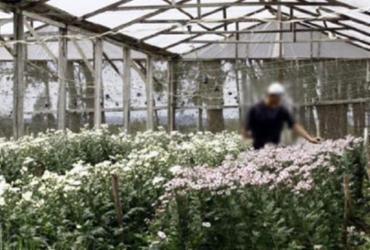Aumenta venda de flores a homoafetivos | Fernando Vivas | Ag. A TARDE