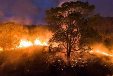 Incêndios continuam arrasando Amazônia e Pantanal |