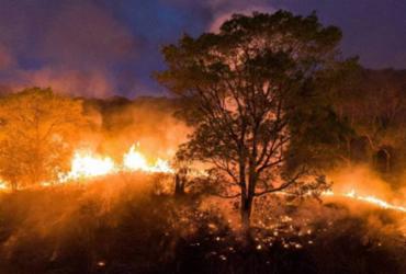 Desmatamento na Amazônia atinge maior área desde 2008, aponta Inpe | AFP