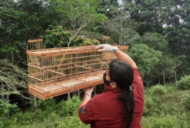 Inema realiza soltura de mais de 39 animais silvestres