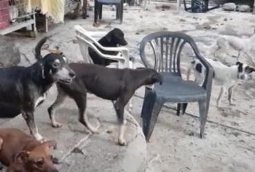 Mulher é presa por manter mais de 100 cães e gatos em situação de maus-tratos | Divulgação | CRMV-BA