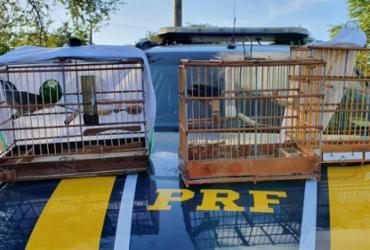 Aves silvestres são resgatadas durante fiscalização na BR-110