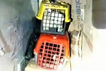 Cães são resgatados de dentro de bagageiro em ônibus no oeste da Bahia | Divulgação | PRF