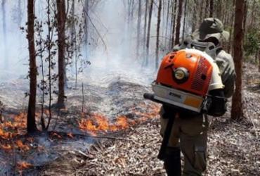 Campanha de combate a incêndios florestais na Bahia é lançada  