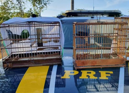 Aves silvestres são resgatadas durante fiscalização na BR-110 | Divulgação | PRF-BA