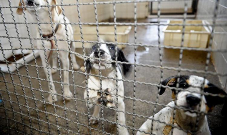 Adoção de um pet requer alguns cuidados | Foto: Fábio Pozzebom | Agência Brasil - Foto: Fábio Pozzebom | Agência Brasil