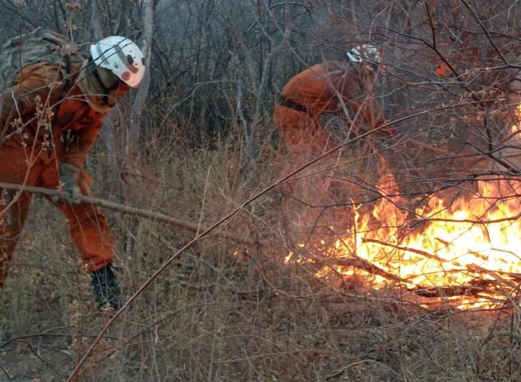 Vários focos de incêndio foram localizados em Barra   Foto: Divulgação   CBMBA - Foto: Divulgação   CBMBA
