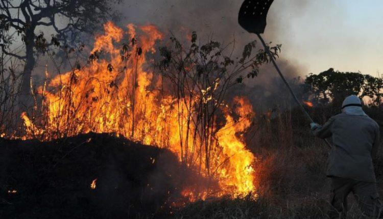 Pedido de demissão vem no momento que o Pantanal e a Amazônia registram recordes de queimadas | Foto: Valter Campanato | Agência Brasil - Foto: Valter Campanato | Agência Brasil