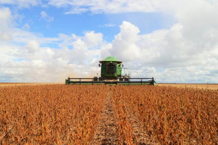 Lavoura de soja deve ser responsável por metade de toda safra de grãos em 2020 - Foto: Divulgação