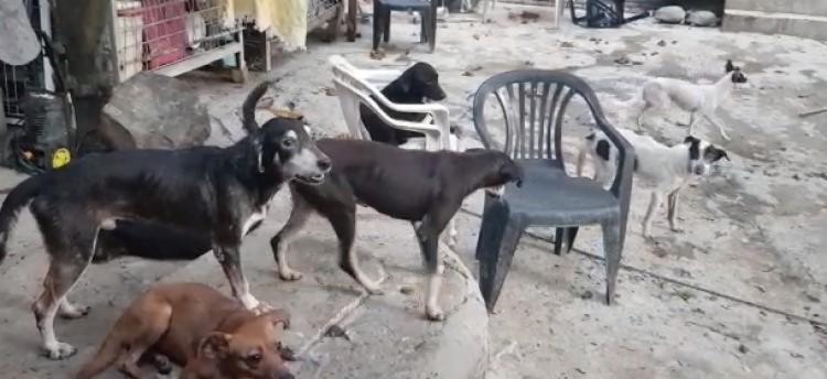 Animais estavam em situação insalubre e muitos apresentavam indícios de doenças perigosas para os seres humanos | Foto: Divulgação | CRMV-BA - Foto: Divulgação | CRMV-BA