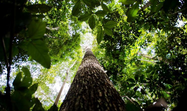 Programa compensará quem preservar áreas onde desmatamento é legal | Foto: Marcelo Camargo | Agência Brasil - Foto: Foto: Marcelo Camargo | Agência Brasil