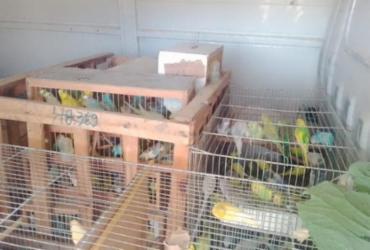 Animais silvestres são resgatados durante fiscalização ambiental em Eunápolis
