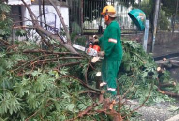 Queda de árvore interdita via na Joana Angélica | Cidadão Repórter | via WhatsApp
