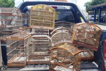 Polícia resgata 36 animais silvestres em Feira de Santana