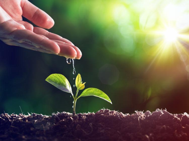 Empresas demonstram olhar mais atento ao meio ambiente - Foto: Reprodução