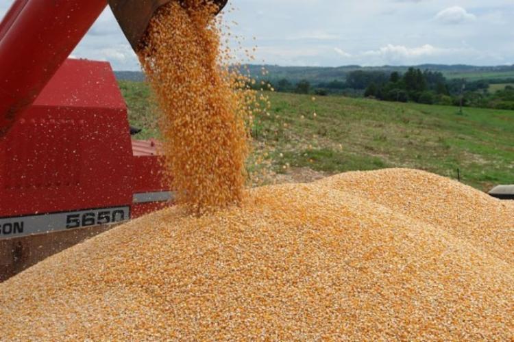 A soja ficou estimada em 6,1 milhões de toneladas, a segunda maior da série histórica do levantamento | Foto: Reprodução | - Foto: Reprodução | IBGE