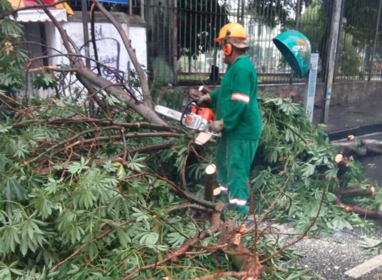 Chuvas na capital baiana teriam causada queda de árvore | Foto: Cidadão Repórter | via WhatsApp - Foto: Cidadão Repórter | via WhatsApp