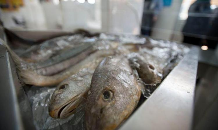 A doença está relacionada ao consumo de peixes   Foto: Marcelo Camargo   Agência Brasil - Foto: Marcelo Camargo   Agência Brasil