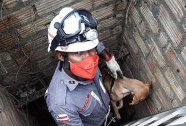 Cão é resgatado pelos bombeiros após cair em buraco de três metros
