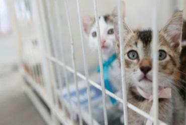 Laboratórios veterinários terão regras para a realização de exames   Rafael Martins   AG. A Tarde