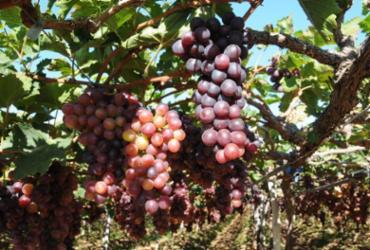 Viva as frutas do nordeste onde futuro virou presente | José Luiz Oliveira | Codevasf | 12.6.2013