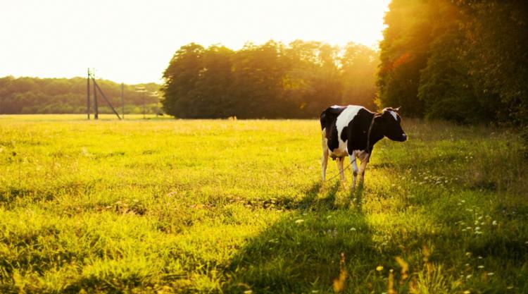 A imagem do agro brasileiro precisa cada vez mais estar associada a fundamentos ambientais | Foto: Divulgação | Freepik - Foto: Divulgação | Freepik