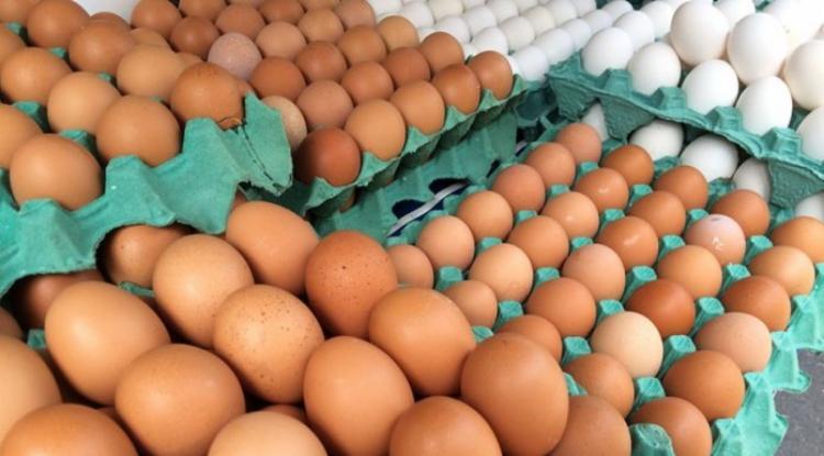 A Bahia é o 9º estado no ranking de abate de frangos, sendo responsável por 2,1% do total nacional | Foto: Luiz Agner| IBGE - Foto: Foto: Luiz Agner| IBGE