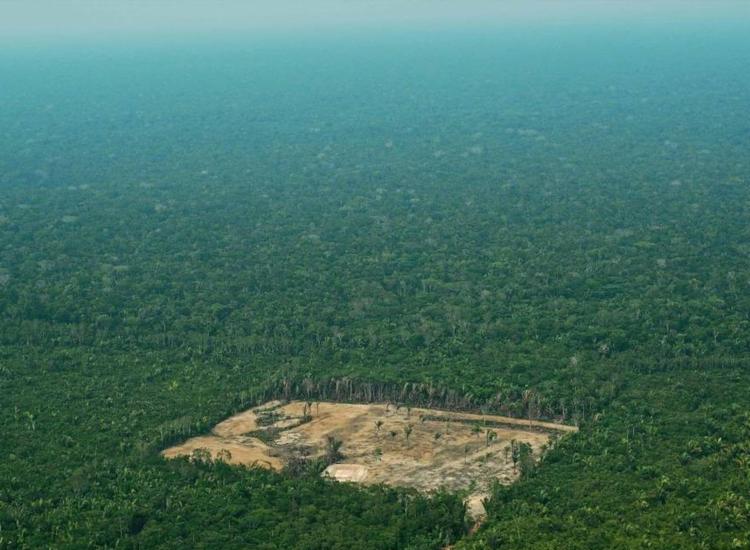 O Greenpeace afirma que o governo Bolsonaro é responsável por um