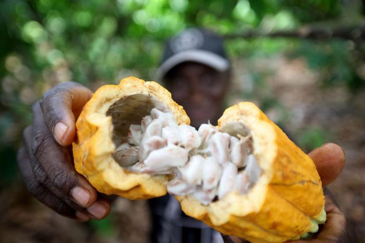 O representante do interior baiano, Gandu, apresentou como exemplo a diversidade de produção de frutas de ciclo curto | Foto: Sidney Oliveira | Divulgação - Foto: Sidney Oliveira | Divulgação