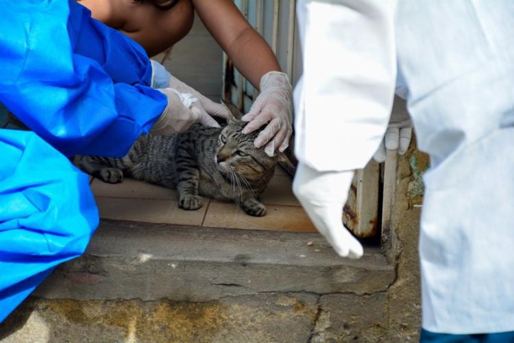 Doença pode causar feridas em animais e também em pessoas I Foto: Valdo Leão I Semcom - Foto: Valdo Leão I Semcom
