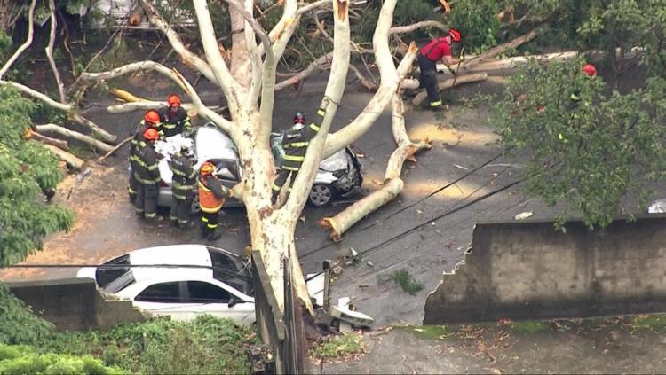 Uma árvore caiu sobre um carro na Vila Mariana e quatro passageiros ficaram presos nas ferragens. A motorista morreu. Crédito: Foto I Reprodução/GloboNews - Foto: Crédito: Foto I Reprodução/GloboNews