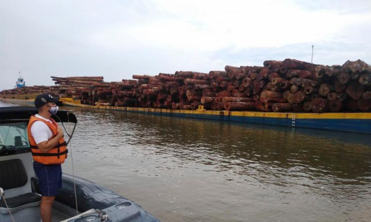 Uma incursão na mesma área resultou na maior apreensão de madeira ilegal da história na última semana - Foto: Divulgação: Forças Armadas
