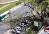 Queda de árvore deixa trânsito congestionado na avenida Juracy Magalhães Júnior | Foto: Cidadão Repórter | via WhatsApp