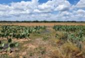 Implantação de sistemas agrícolas resgata espécies vegetais no semiárido baiano | Foto: