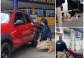 Três veículos com ocorrências de furto são recuperados em trechos baianos | Foto: Divulgação | PRF