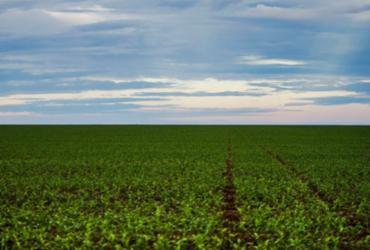 Número de agrotóxicos registrados em 2020 é o mais alto da série histórica   Agência Brasil