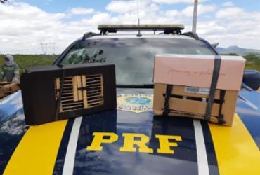 Onze pássaros silvestres são resgatados na BR-110 | Divulgação | PRF