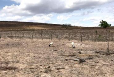 Feira de Santana: Município declara situação de emergência em áreas rurais atingidas pela estiagem