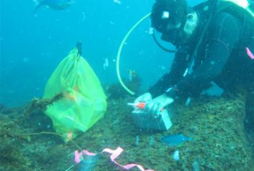 Efeito das mudanças climáticas nos oceanos é tema de live nesta sexta | Divulgação